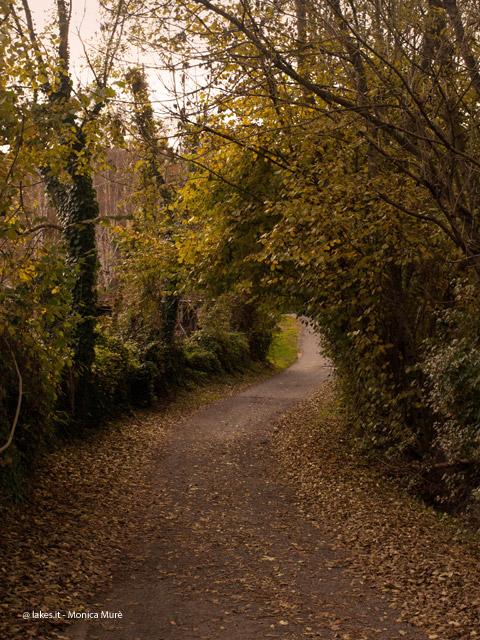 Parco Naturale dei Laghi. Grignetto in autunno.