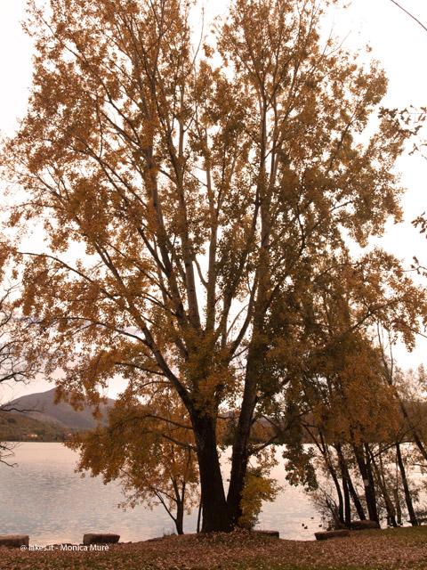 Parco Naturale dei Laghi di Avigliana, in autunno