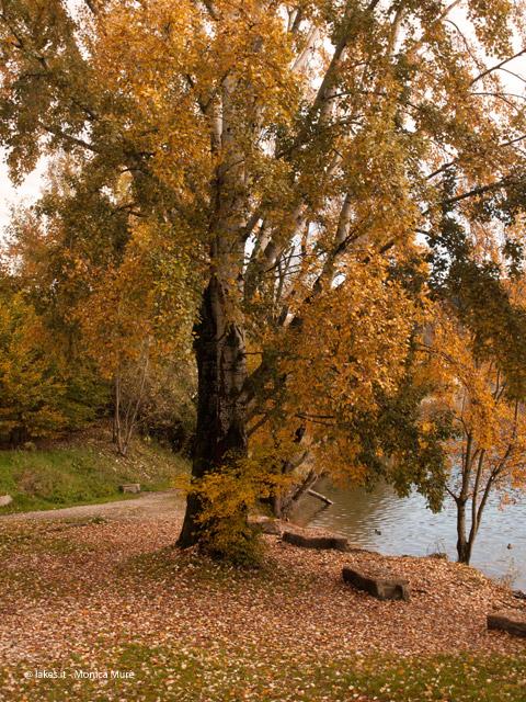 Passeggiata del lago Grande di Avigliana, ingresso baia GrandePasseggiata del lago Grande di Avigliana, ingresso baia Grande